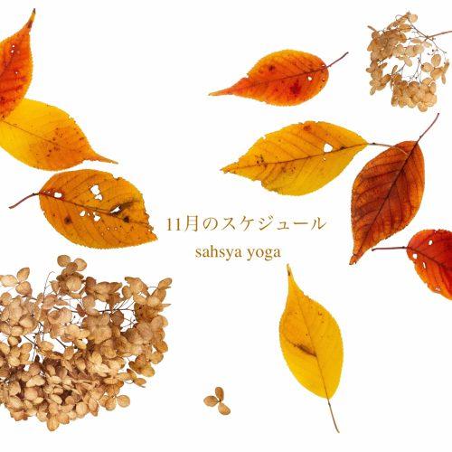 11月のスケジュール 〜 ヨーガの時間 〜