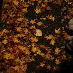 巡る季節、巡るわたしたち / 有馬温泉での再会に寄せて